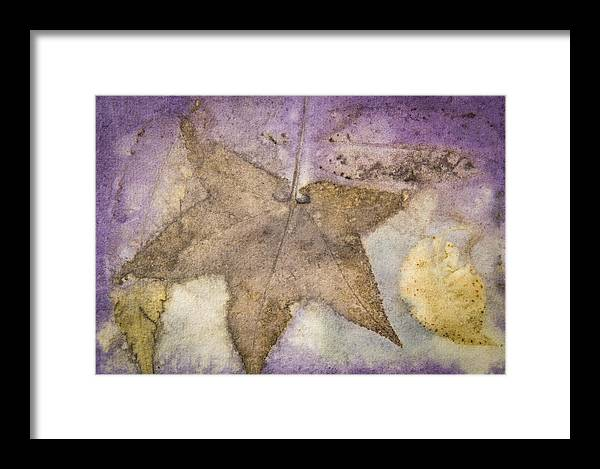 Jan Framed Print featuring the photograph Number 30 by Jan Durham