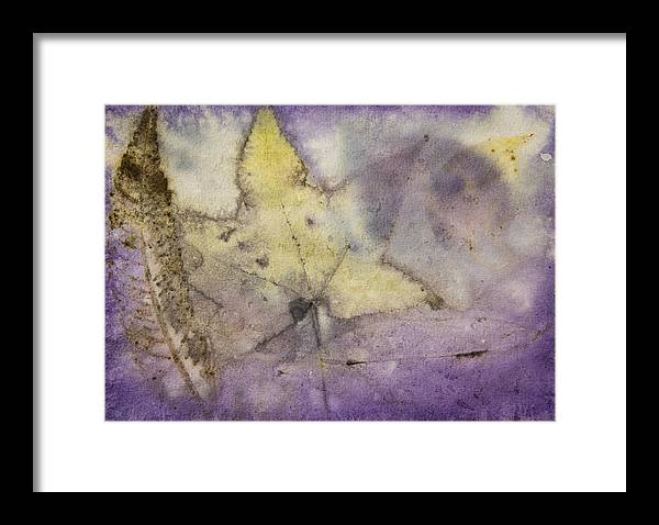 Jan Framed Print featuring the photograph Number 32 by Jan Durham