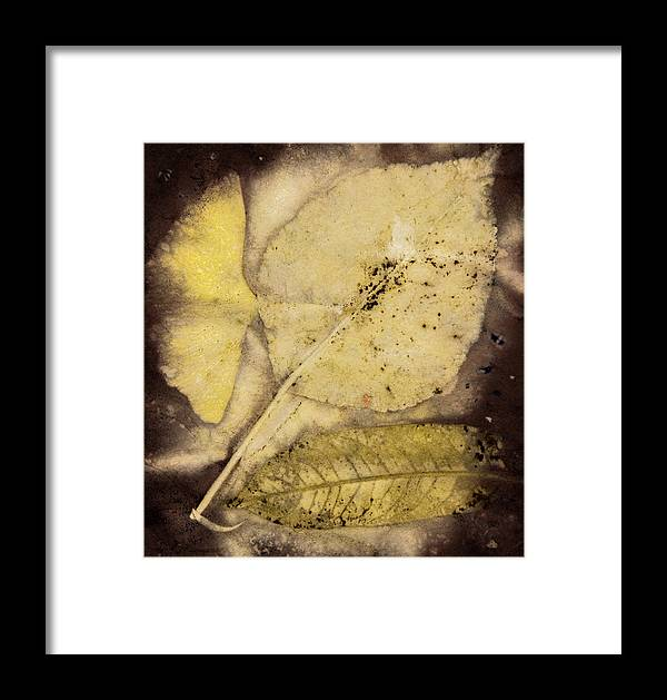 Jan Framed Print featuring the photograph Number 56 by Jan Durham