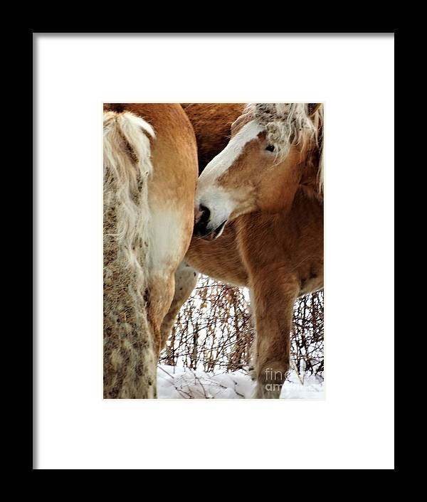 Workhorses Vermont Farming Framed Print featuring the photograph Nurture Nature 2 by Karen Velsor