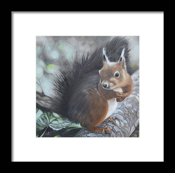 Squirrel Framed Print featuring the painting Nutkin by Nicola Colbran
