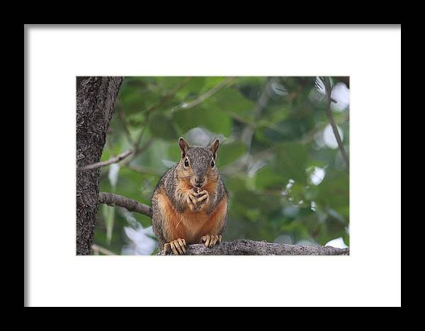 Nature Framed Print featuring the photograph Nuts by Ariaa Jaeger