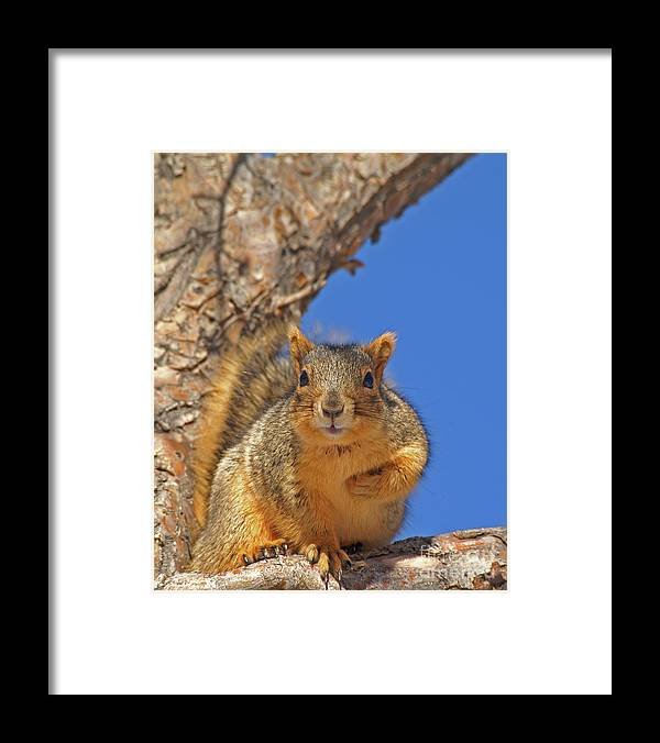 Cute Framed Print featuring the photograph Nutty Pledge by Jack Norton