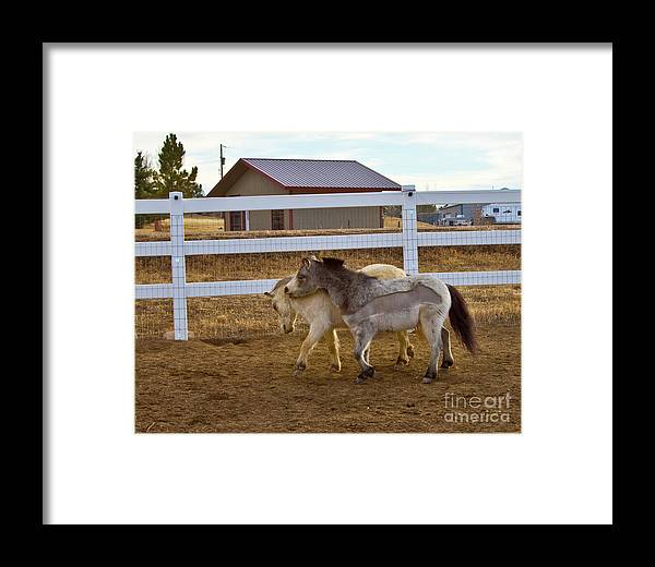 Agriculture Framed Print featuring the photograph Nuzzeling Horses by Crystal Garner