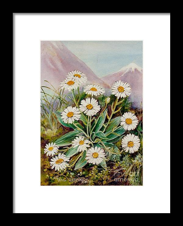 Mountains Framed Print featuring the painting Nz Mountain Daisy by Val Stokes