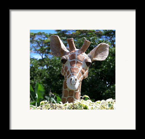 Hawaii Framed Print featuring the photograph Oahu Giraffe by Michael Lewis