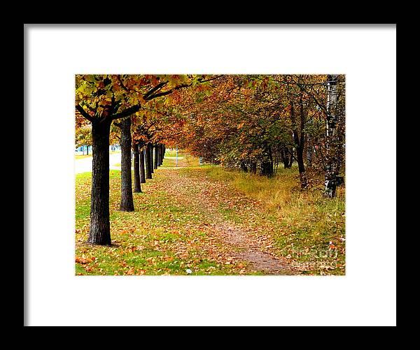 Oak Framed Print featuring the photograph Oak Line by Esko Lindell