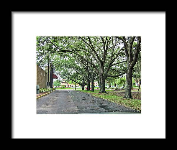 Trees Framed Print featuring the photograph Oak Lined Drive by Francesco Roncone