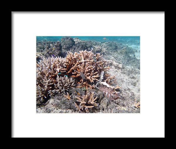 Coral Framed Print featuring the pyrography Ocean Fiji by Heather Fiedler