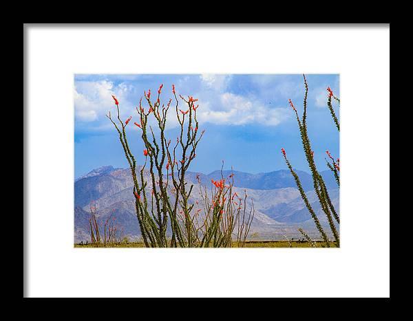 Bonnie Follett Framed Print featuring the photograph Ocotillo Cactus With Mountains And Sky by Bonnie Follett