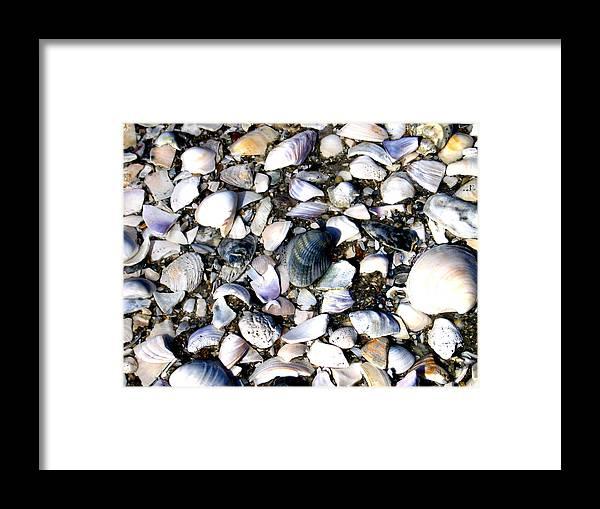 Ocracoke Framed Print featuring the photograph Ocracoke Shells by Wayne Potrafka