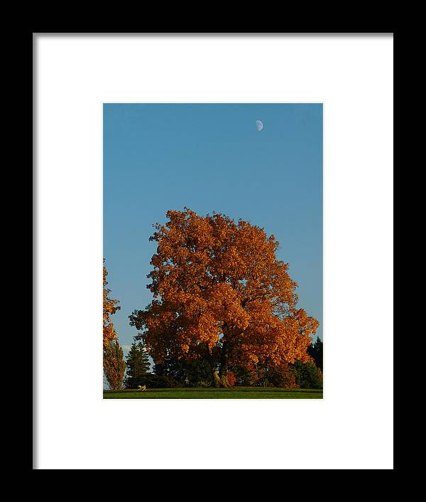 Boston Framed Print featuring the photograph October Day by Juergen Roth