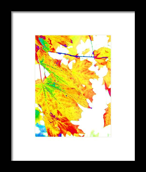 Leaves Framed Print featuring the photograph October Leaves by Nick Gustafson