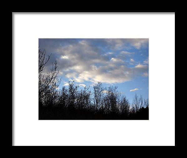 Trees Framed Print featuring the photograph October Skies by Marilynne Bull