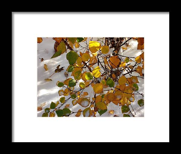 Aspen Leaves Framed Print featuring the photograph October Snow by Marilynne Bull