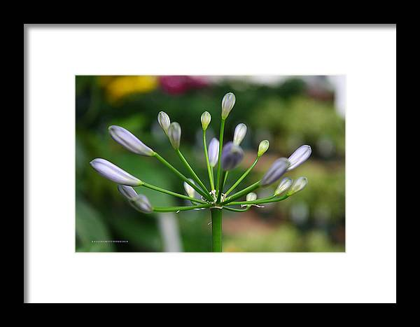 Purple Framed Print featuring the photograph Oddity Is Beauty by KatagramStudios Photography