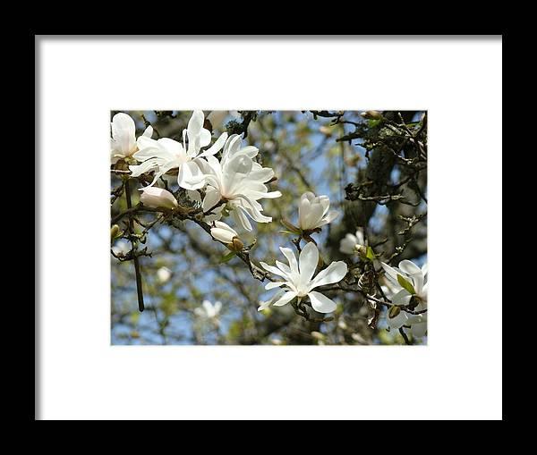office art prints magnolia tree flowers landscape 15 giclee prints