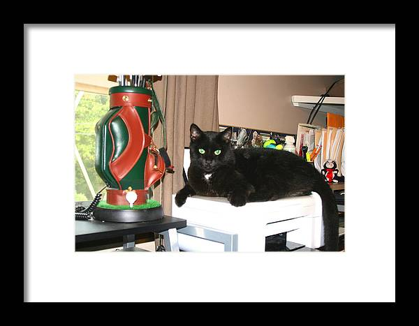 Cats Framed Print featuring the photograph Office Help by CGHepburn Scenic Photos