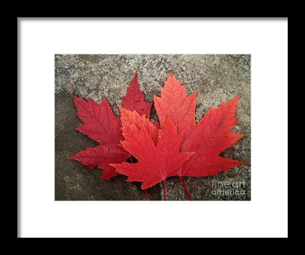 Canadian Symbols Framed Print featuring the photograph Oh Canada by Reb Frost