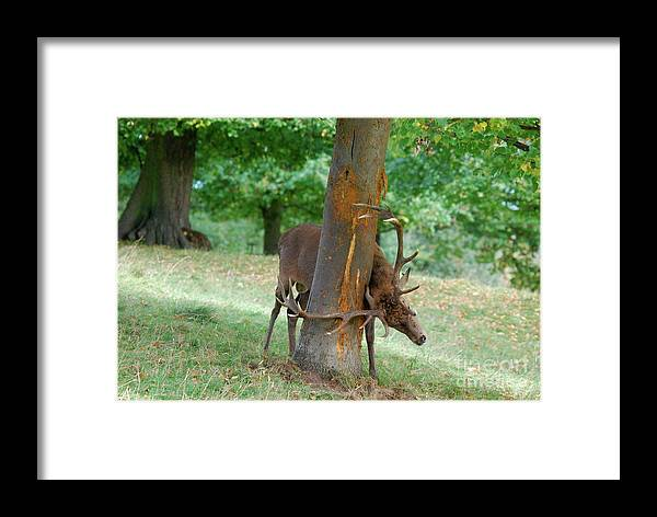 Doug Thwaites Framed Print featuring the photograph Oh Thats Better by Doug Thwaites