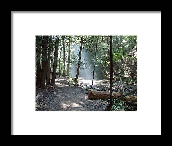 Photo Framed Print featuring the photograph Ohio Woods by Mindy Newman