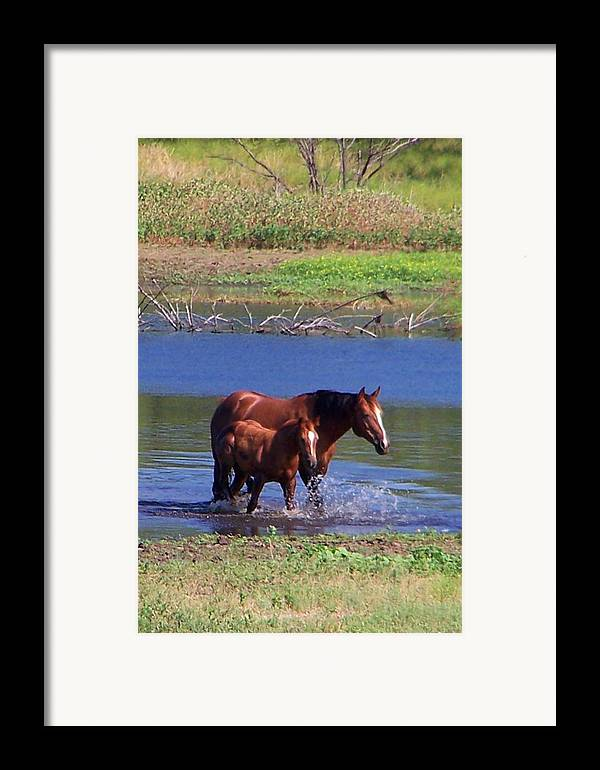 Horses Framed Print featuring the photograph Okay Time To Go. by Lilly King