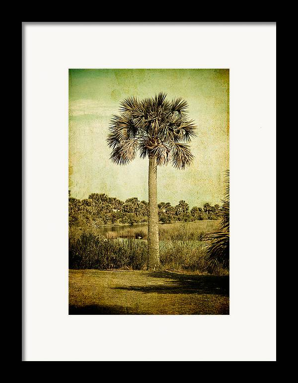 Palm Framed Print featuring the photograph Old Florida Palm by Rich Leighton
