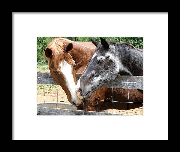Horse Framed Print featuring the photograph Old Friends Are The Best Friends by Julie Niemela