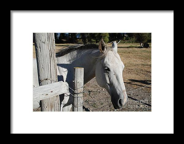 Horses Framed Print featuring the photograph Old Grey Mare by Jim Goodman