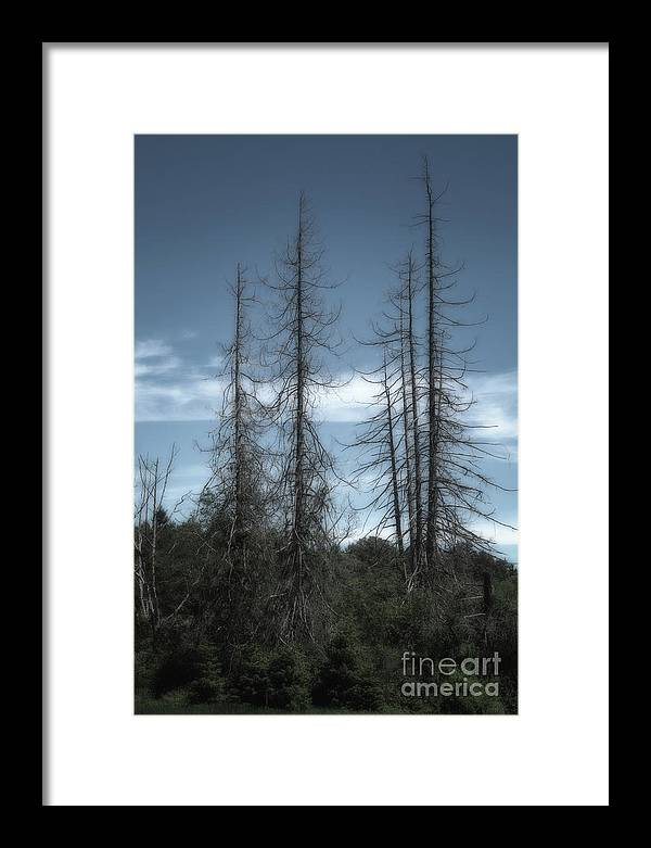 Trees Framed Print featuring the photograph Old Guard by David Hillier