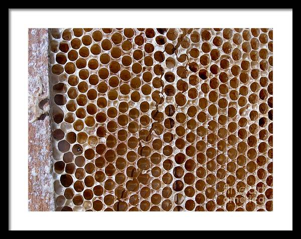 Honey Framed Print featuring the photograph Old Honey Comb Bee Hive by Kathy Daxon
