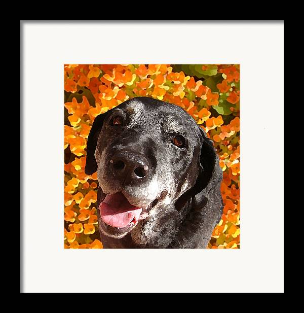 Labrador Retreiver Framed Print featuring the painting Old Labrador by Amy Vangsgard