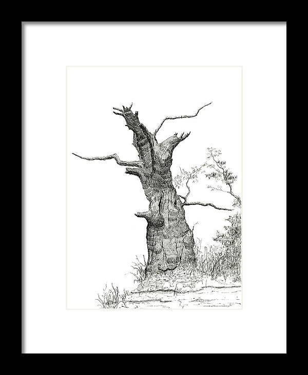 Old Framed Print featuring the drawing Old Oak by Jeno Futo