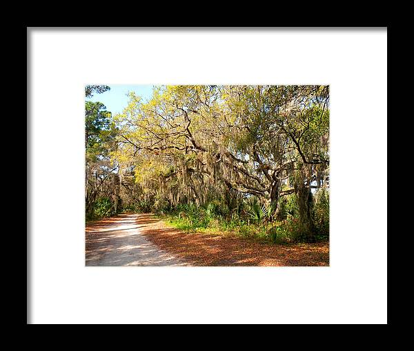Trees Framed Print featuring the photograph Old Oak Trees And Moss by Rosalie Scanlon