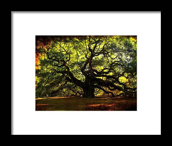 Angel Oak Framed Print featuring the photograph Old Old Angel Oak In Charleston by Susanne Van Hulst