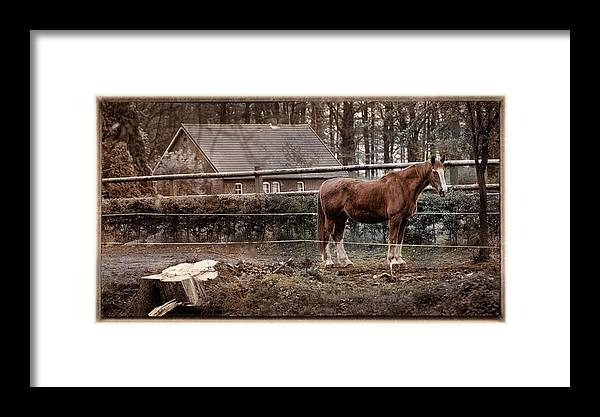 Northern Germany Framed Print featuring the photograph Old Stayer by David Melville