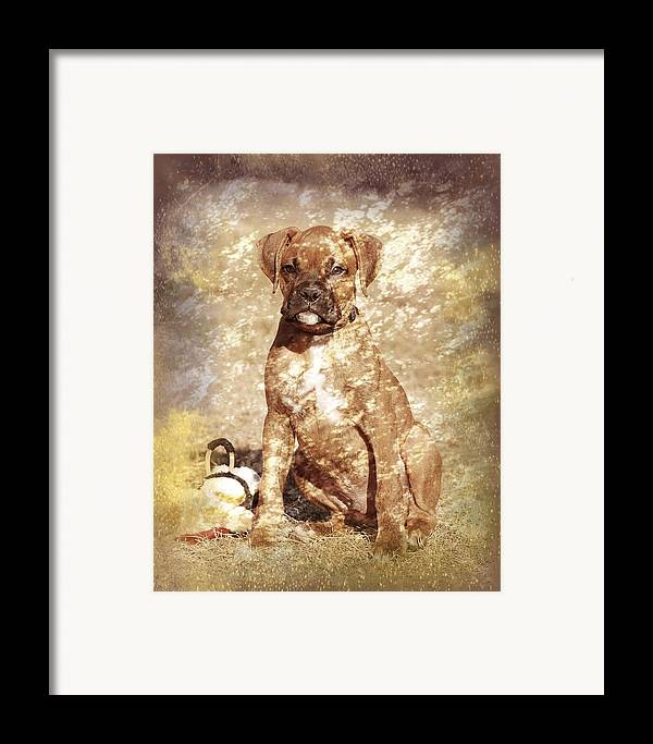 K9 Framed Print featuring the photograph Old Time Boxer Portrait by Angie Tirado