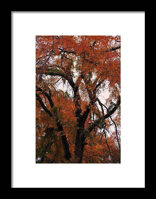 Tree Framed Print featuring the photograph Old Timer by Trudi Southerland