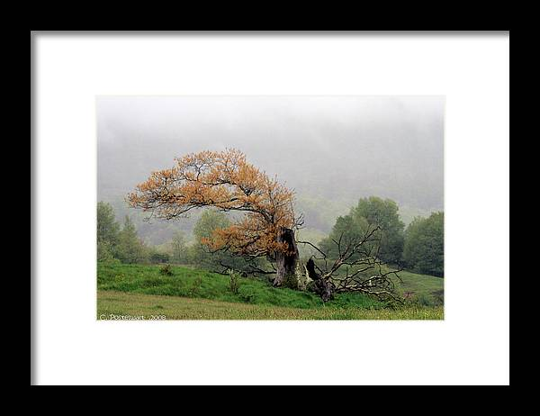 Trees Framed Print featuring the photograph Old Tree by Carolyn Postelwait