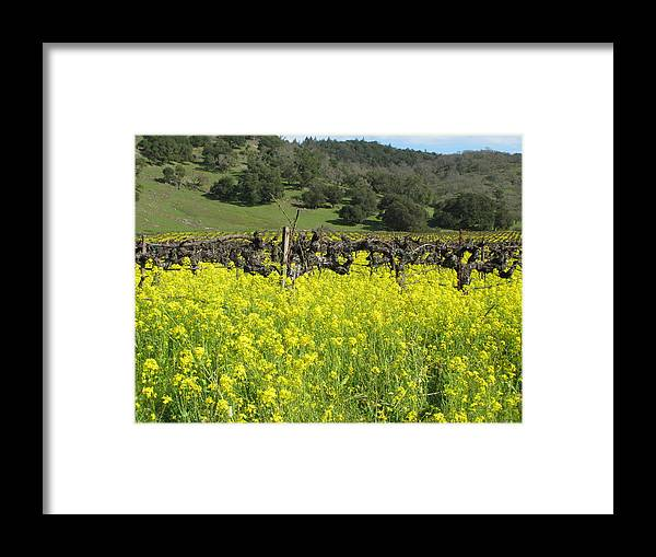 Landscape Framed Print featuring the photograph Old Vines by Kim Pascu
