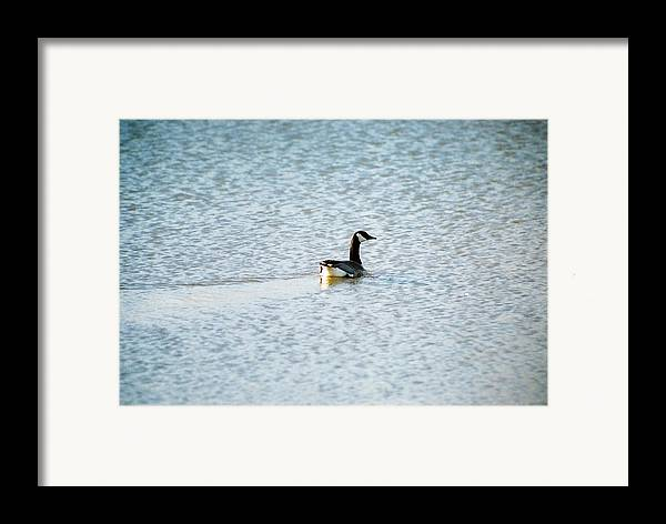 Water Framed Print featuring the photograph On Blue Water by Jennifer Trone