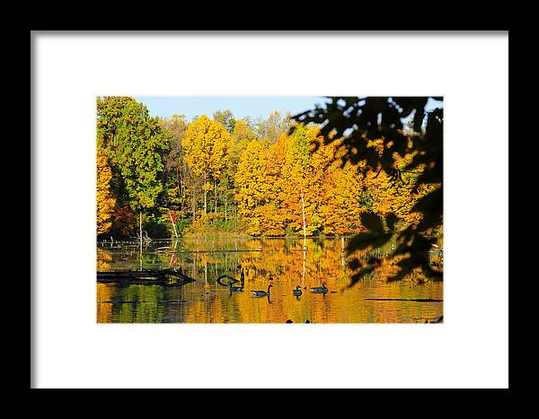 Geese Framed Print featuring the photograph On Golden Pond 2 by David Arment
