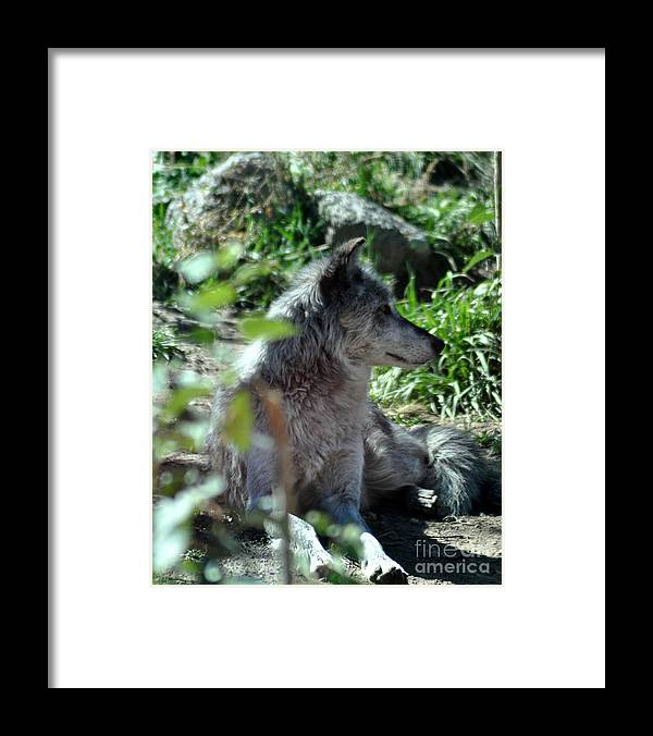 Berry Framed Print featuring the photograph On Guard by Diane E Berry