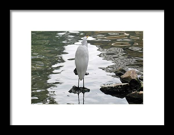 Teresa Blanton Framed Print featuring the photograph On Solid Rock by Teresa Blanton