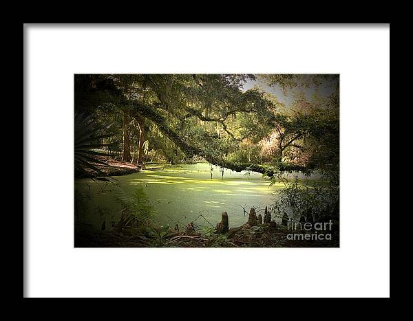Swamp Framed Print featuring the photograph On Swamp's Edge by Scott Pellegrin
