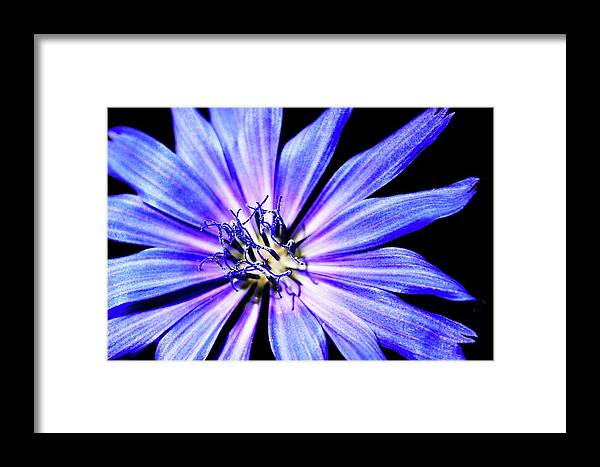 Flower Framed Print featuring the photograph On The Dance Floor by Toni Jackson