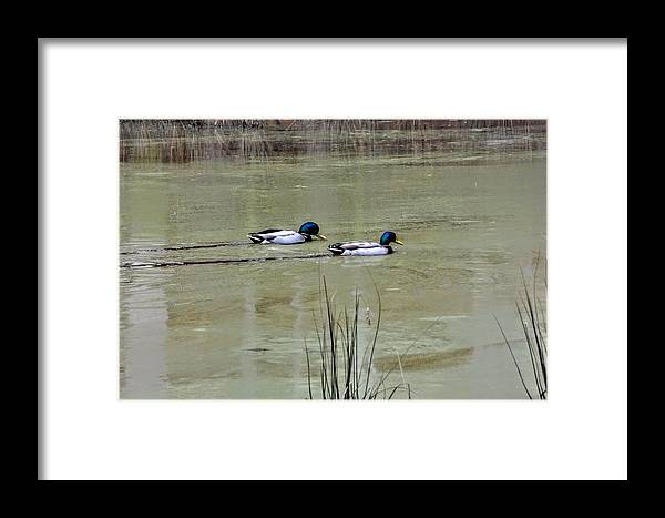 Framed Print featuring the photograph On The Lake by FD Brake