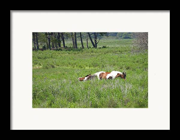 Pinto Framed Print featuring the painting On The Move by Kim