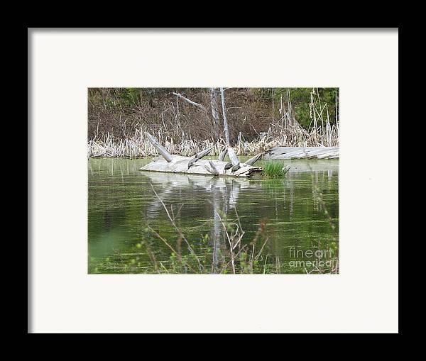 Turtle Framed Print featuring the photograph On The Pond by Juli House