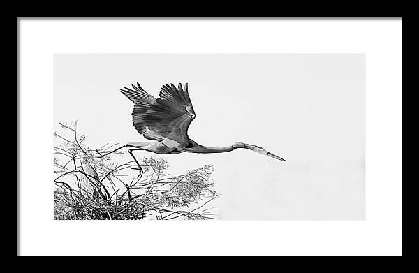 Framed Print featuring the photograph On The Wing by Joseph Reilly